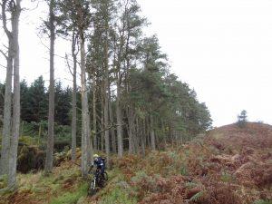 Trees & Trails